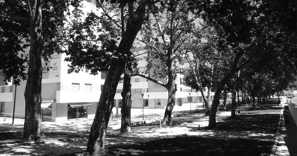 Jardim dos Plátanos em Alferrarede
